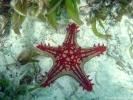 Zeester_Indische Oceaan_Zanzibar